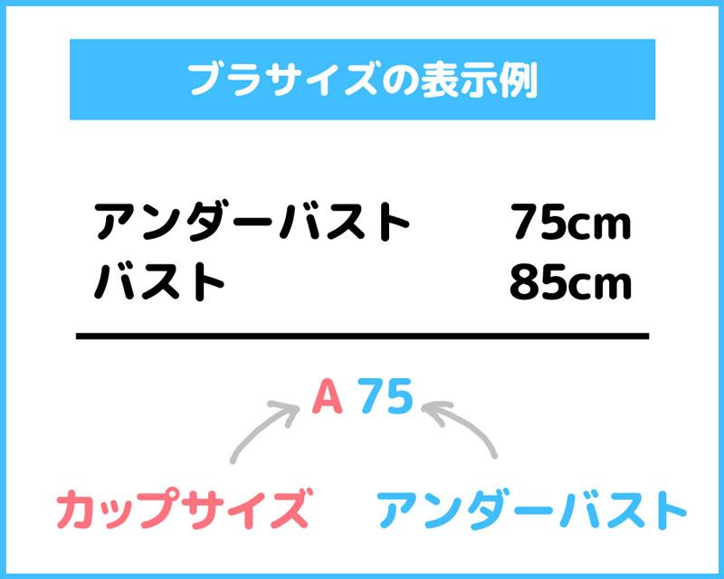 ブラサイズ表記例